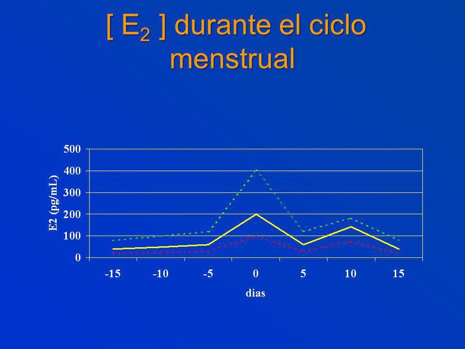 [ E2 ] durante el ciclo menstrual